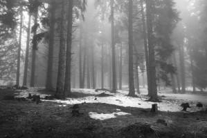 Запази гората - Петър Крусев