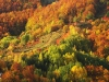 Autumn colors - Rodopi forest